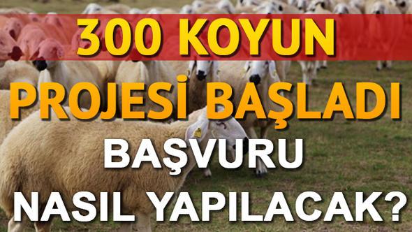 TİGEM 300 Koyun Projesi Şartları Belli Oldu